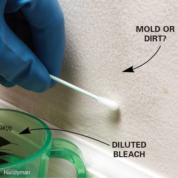 Is it Mold or Dirt?