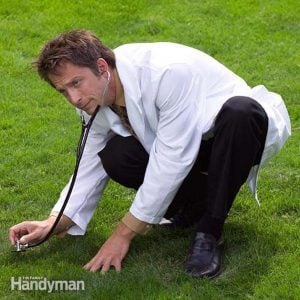 The Top 10 Perfect Lawn Maintenance Tips
