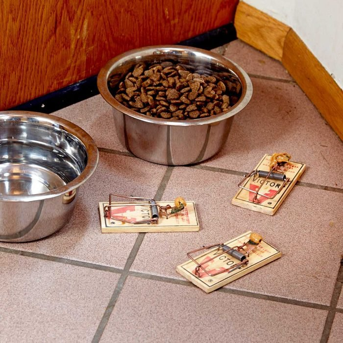 Pet Food is a Problem and an Opportunity