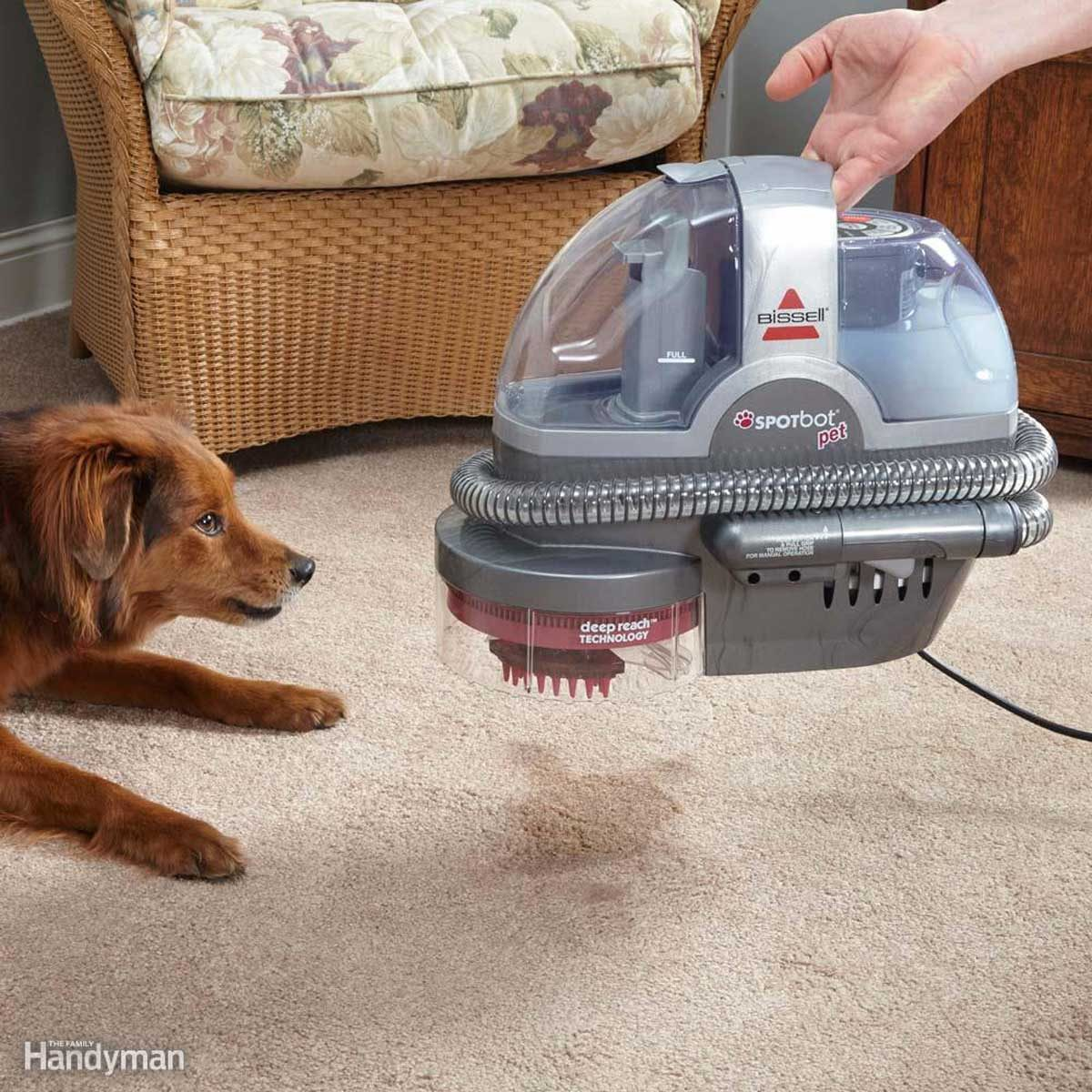 Fast Fix for Pet Stains
