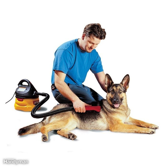 Don't Brush the Dog — Use a Vacuum Instead!