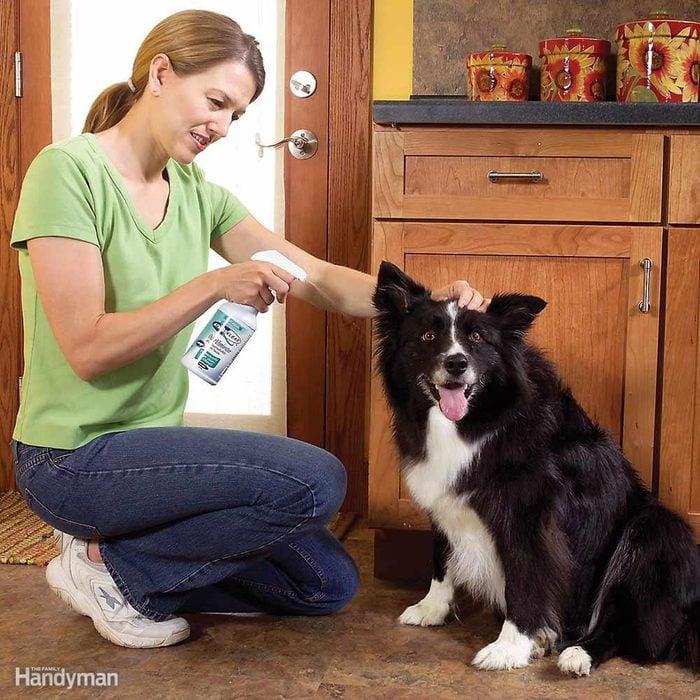 Eliminate Pet Smells