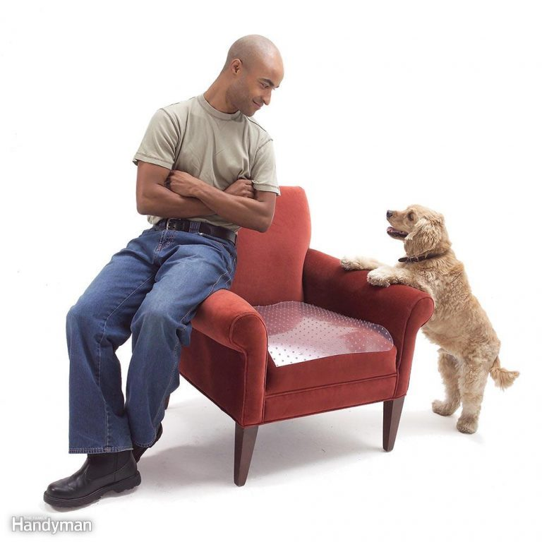 best way to clean pet urine from couch