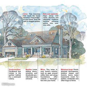 How pests get into a house diagram