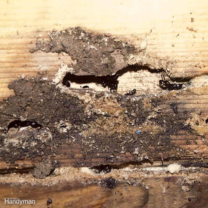 How to Find Ant Nests