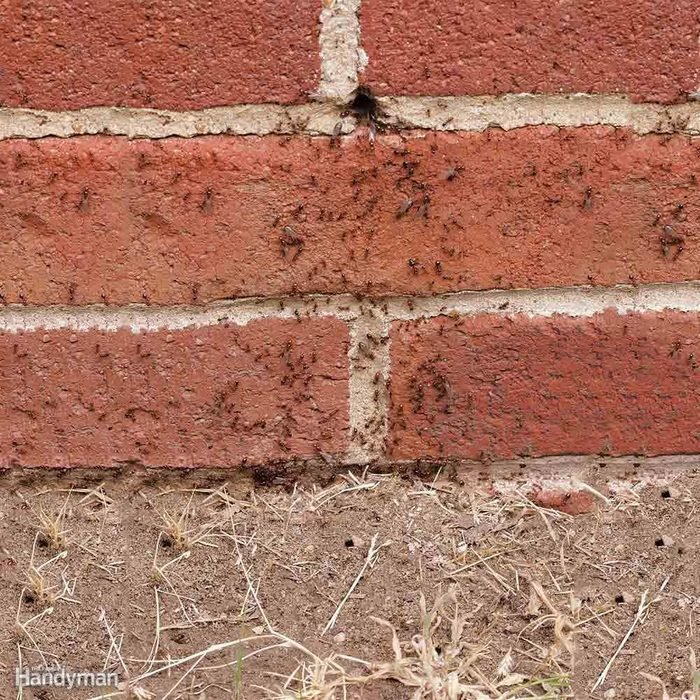 How to Kill Ants in Your Yard: Destroy Exterior Nests