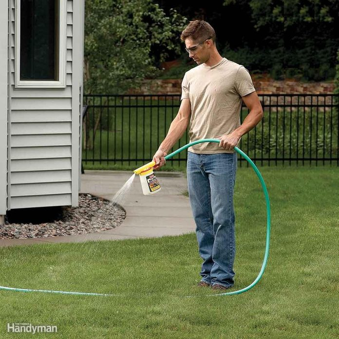 How to Kill Ants in Your Yard