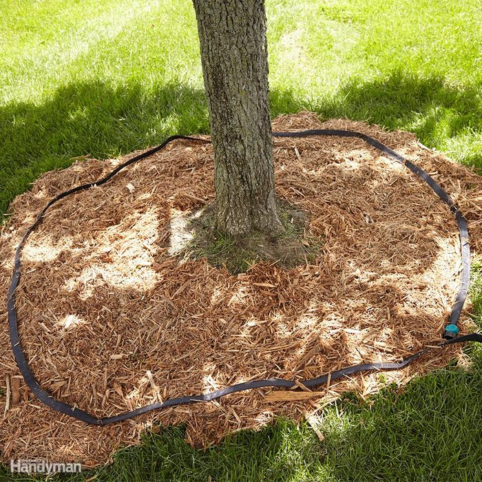 Check Your Soil Before Watering and Water Carefully