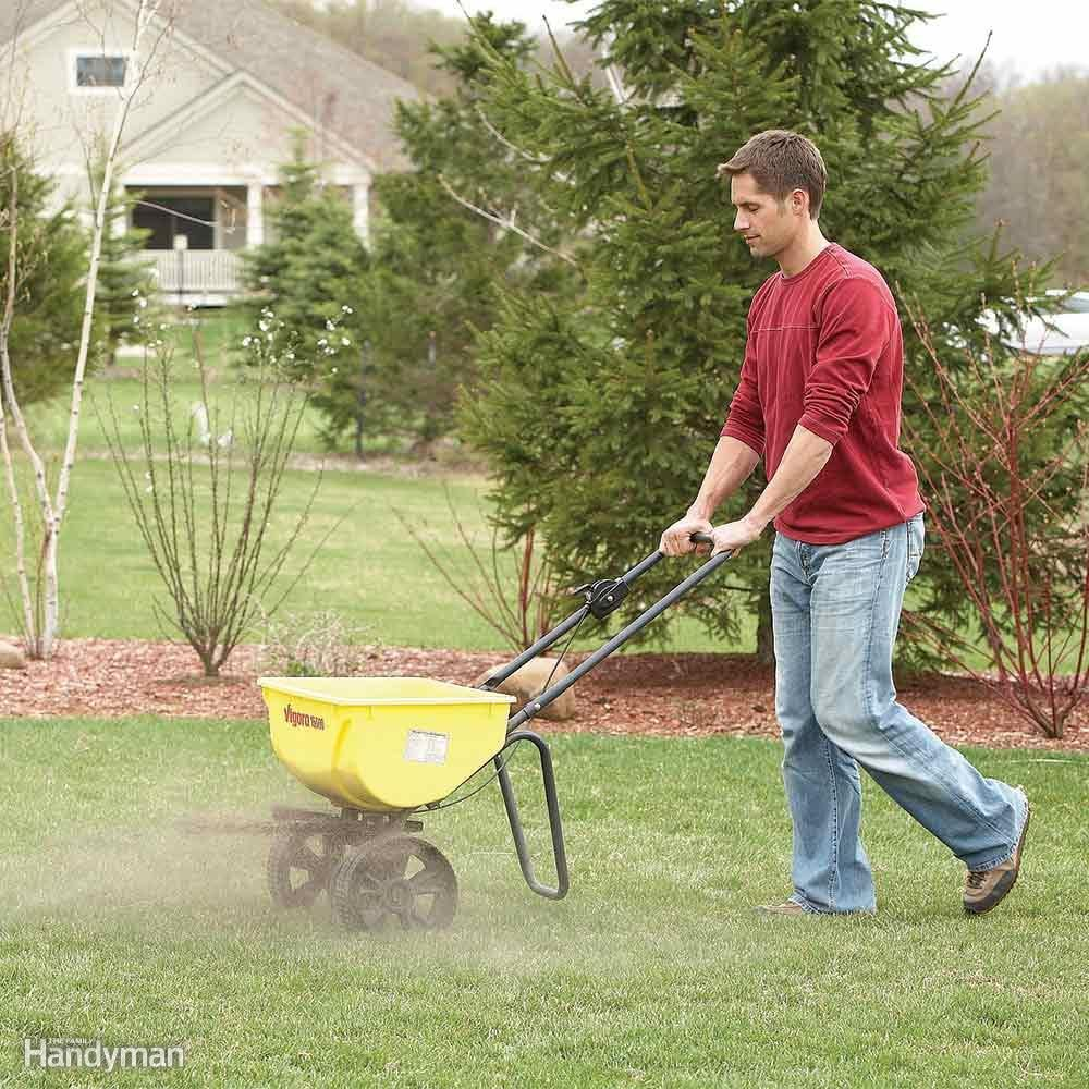 Reseed to Prevent Weeds