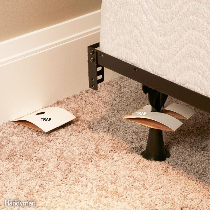 setting bed bug traps