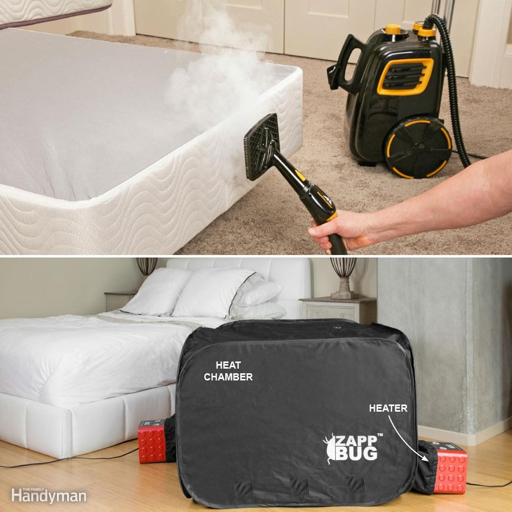 How To Get Rid Of Bed Bugs A Diy Guide The Family Handyman
