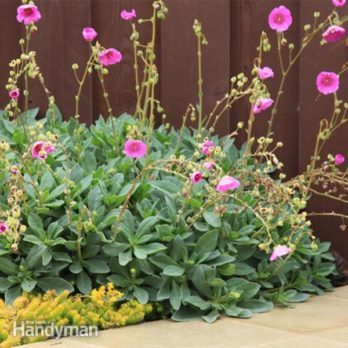 8 Succulents That Make Pretty, Easy-Care Ground Covers