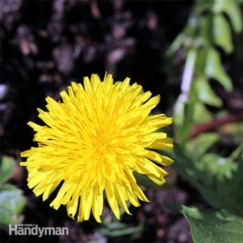 Natural Ways to Get Rid of Weeds
