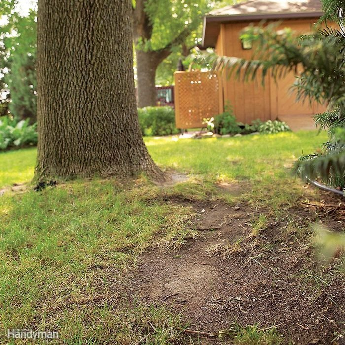 Plant Hardy Ground Covers in Shady Areas