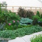 Rose Gardens: My Radical Response to Japanese Beetles