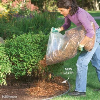 Tips for a Weed Free Yard