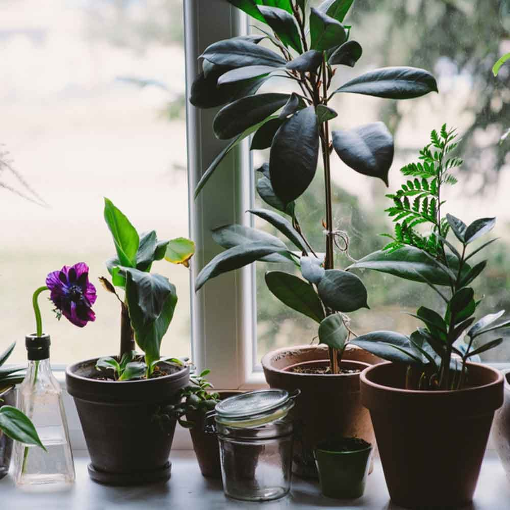 Plant a Windowsill Garden