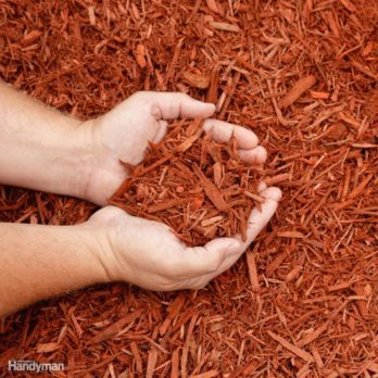 10 Easy Alternatives to a Grass Lawn