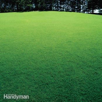 Cures for a Patchy Lawn