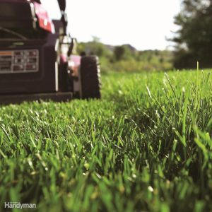 Tips for Buying a Walk-Behind Lawn Mower