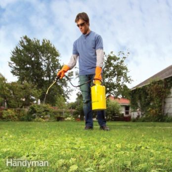How to Eliminate Lawn Weeds