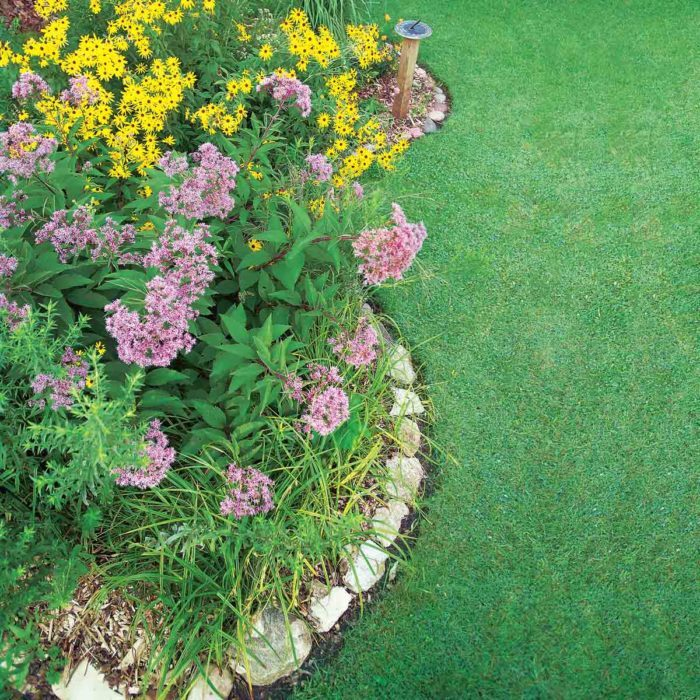 How to Build a Rain Garden in Your Yard