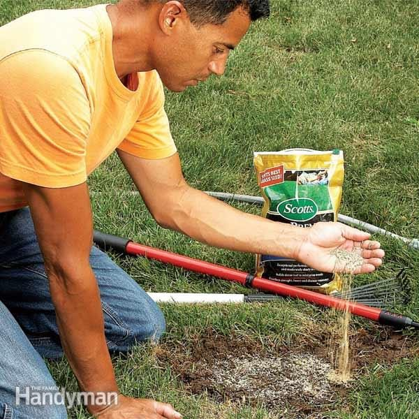 Fixing Dead Spots In Your Lawn The Family Handyman