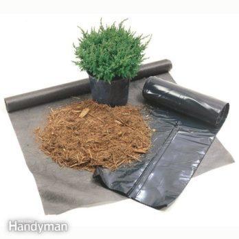 Best Way to Control Weeds