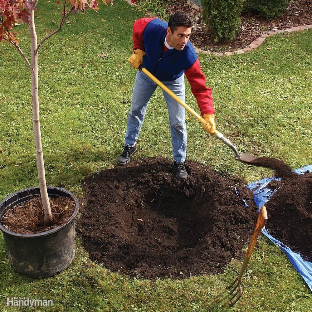 Сажать дерево в землю 669