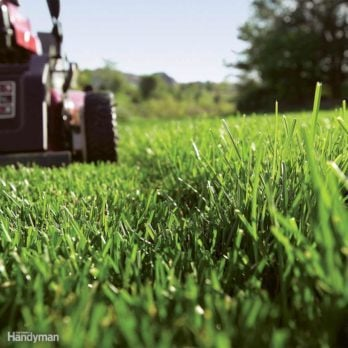 The Best Natural and Organic Green Lawn Care Tips