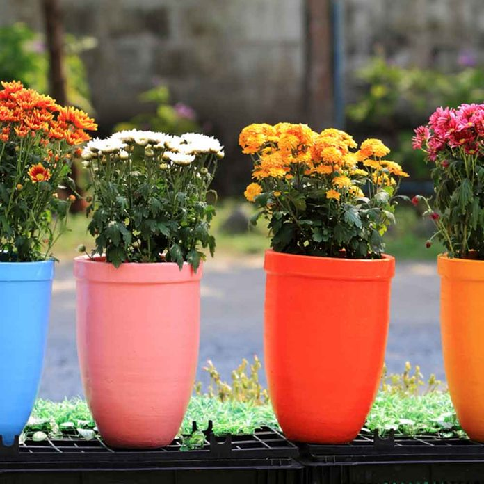 colorful flower pots with flowers