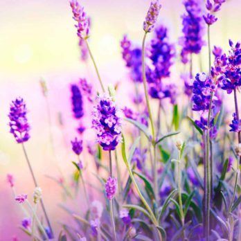 10 Bee Friendly Plants to Have in Your Yard