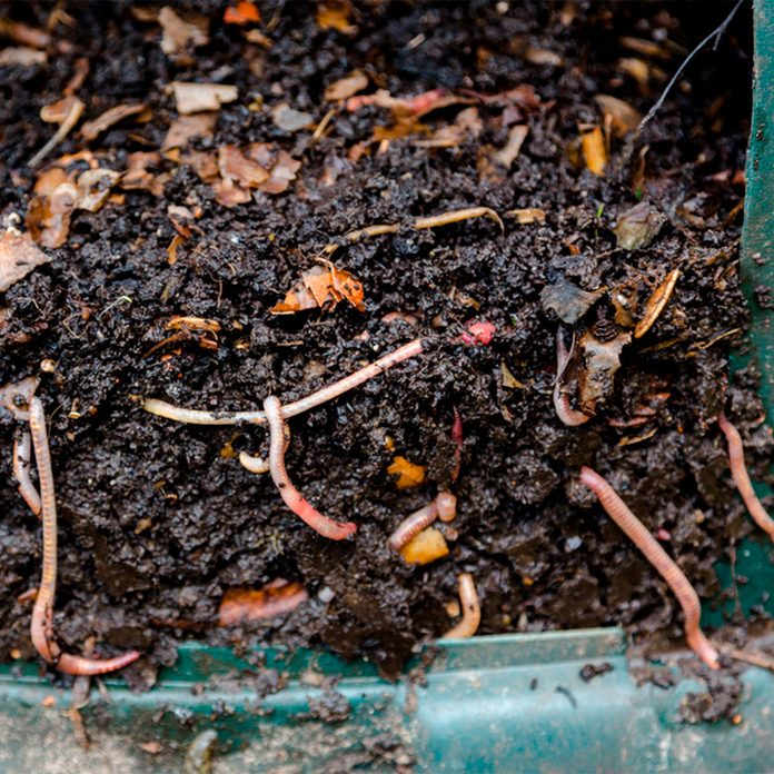 Composting Other Scraps