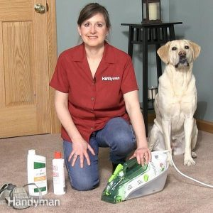 Get Dog & Cat Urine Out of Carpet