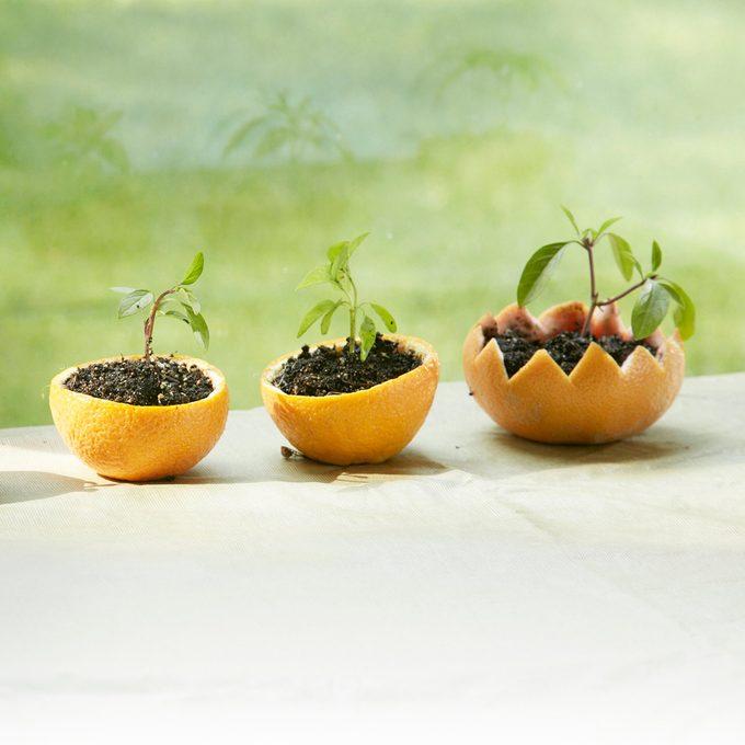 Citrus-rind seed starters