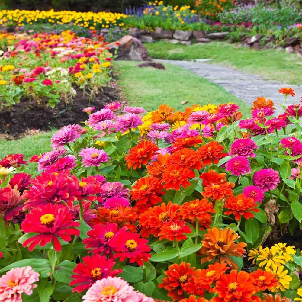 49 Colorful Plants to Brighten Up Your Landscape — Family Handyman ...