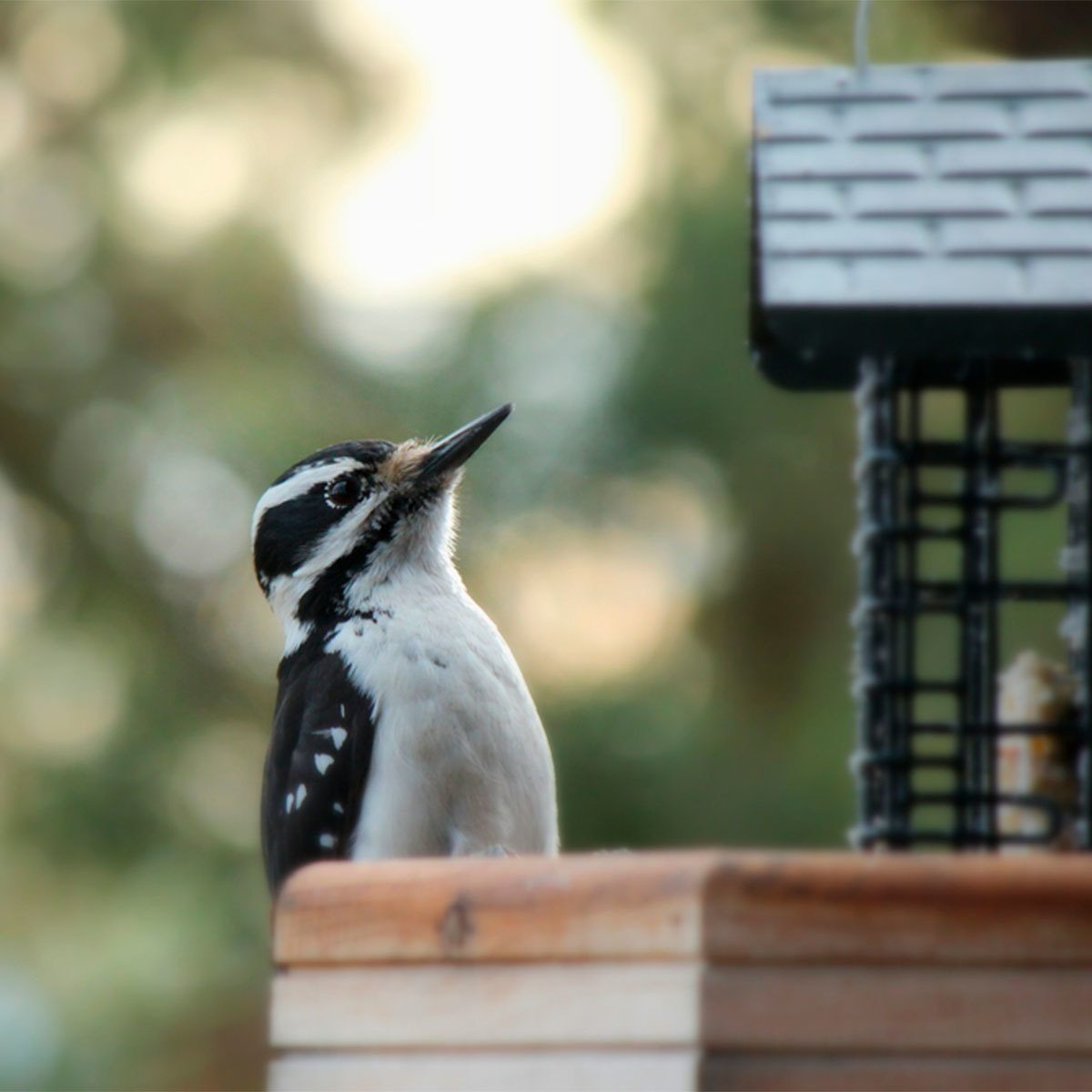 How to Scare Away Woodpeckers: Noise Solutions