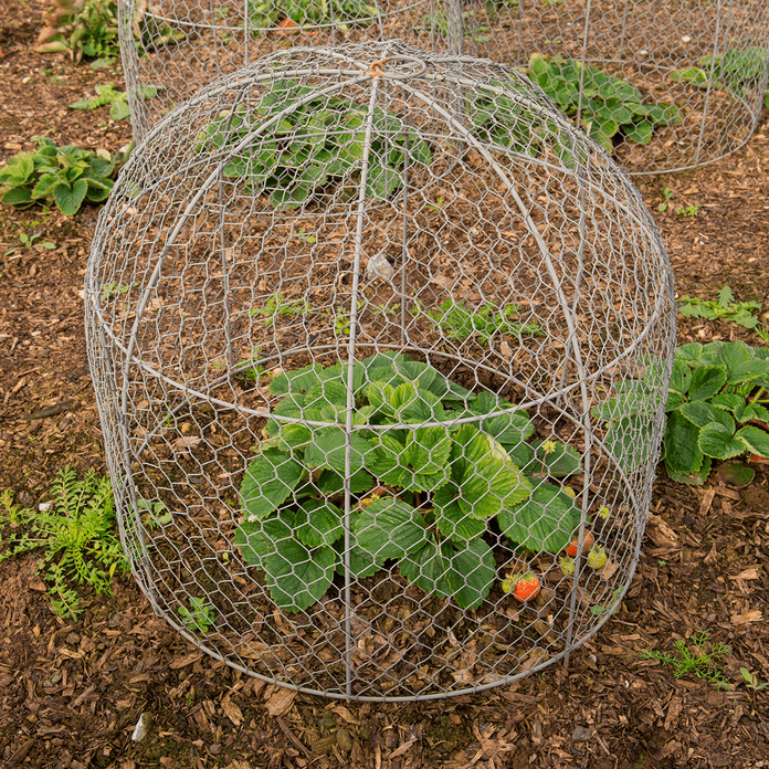 cage over vegetable plant