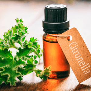 11 Natural Bug Repellents Worth Trying