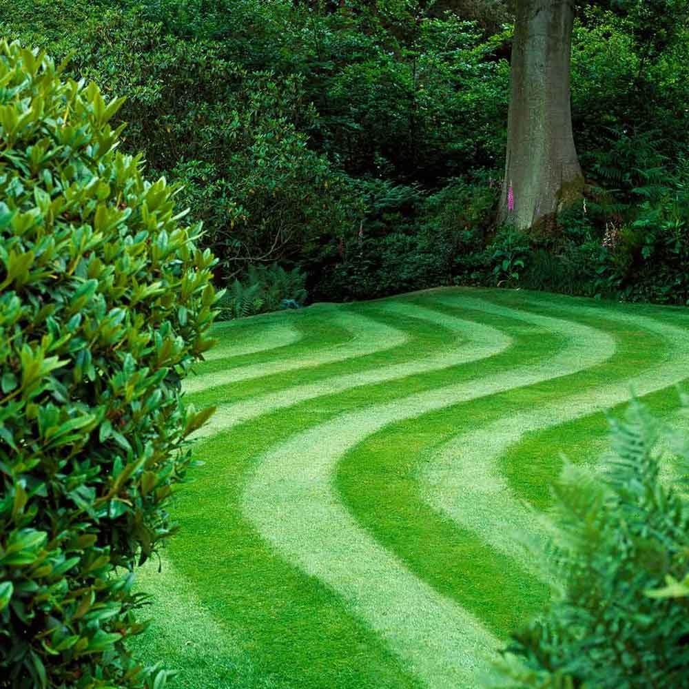 How To Grow Greener Grass The Family Handyman