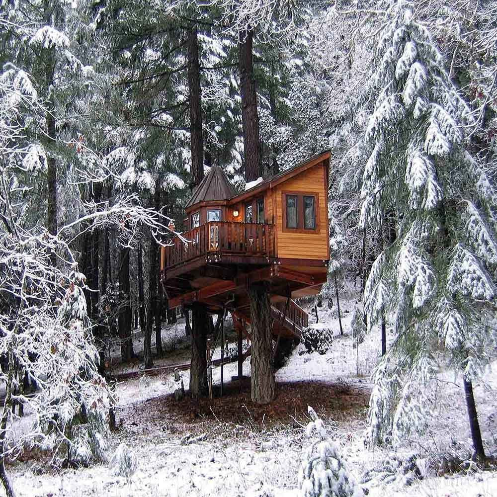 Home Building Ideas: Amazing Tree House Ideas And Building Tips