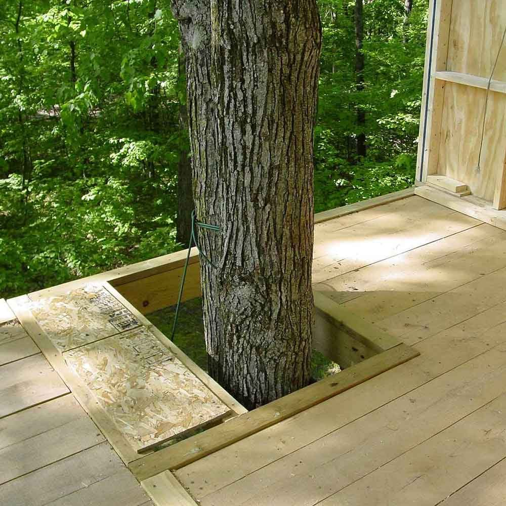 Building Tip 3: Don't Restrict Tree Growth