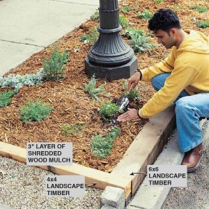 Hardy Plants and Tips for a Boulevard Garden