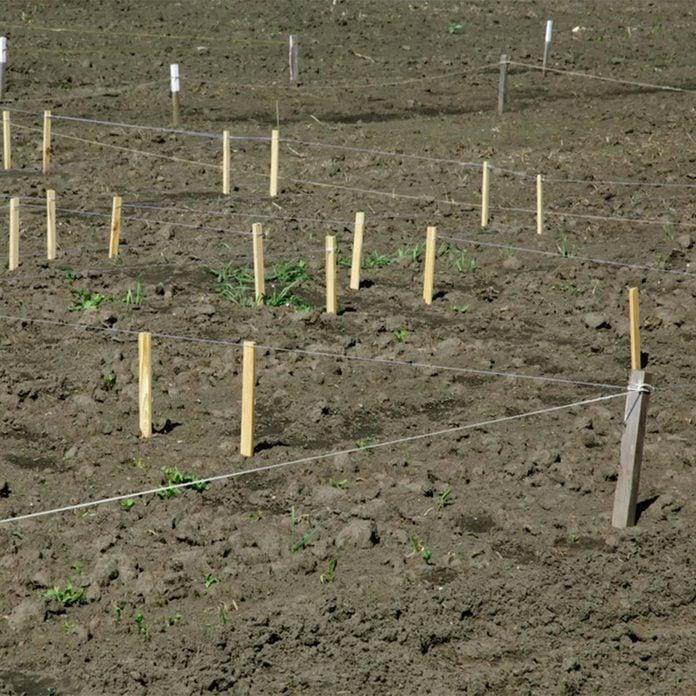 marked garden layout