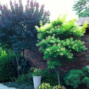 Space-Saving Trees for Today's Smaller Gardens
