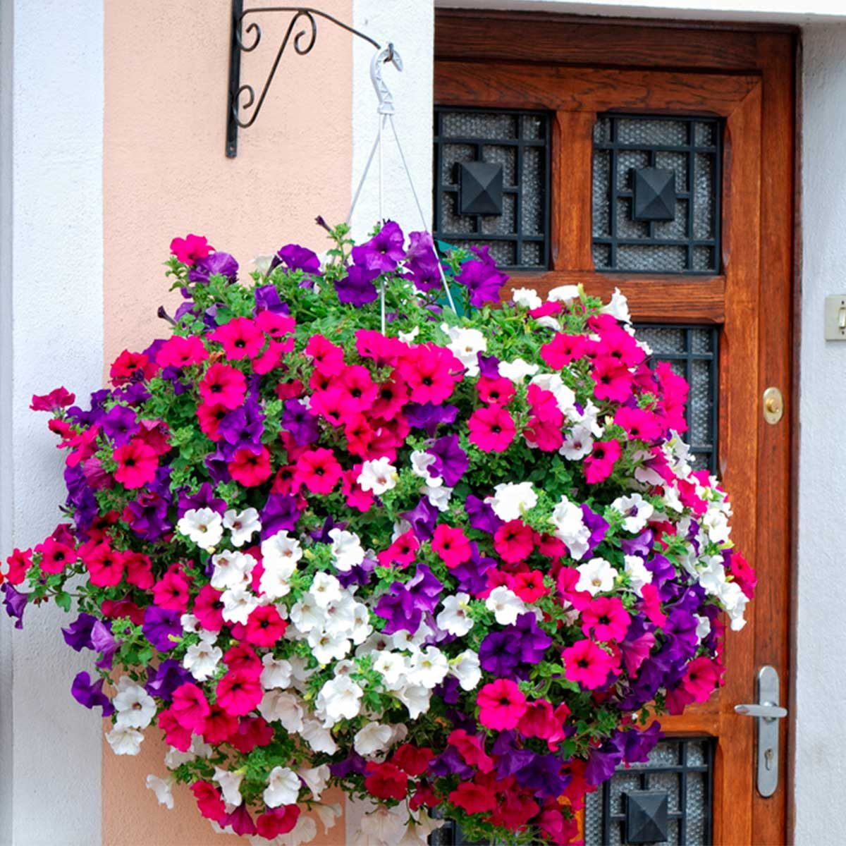 red white and purple hanging planter