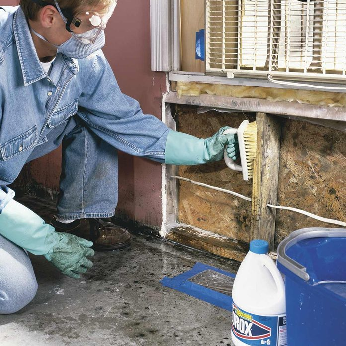 Discovering and Removing Mold
