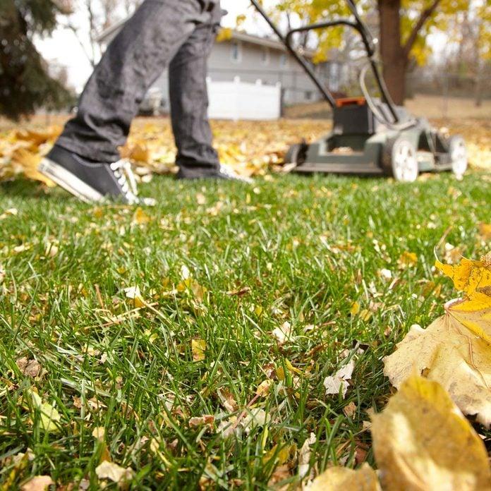 Leaf Lawn Fertilizer