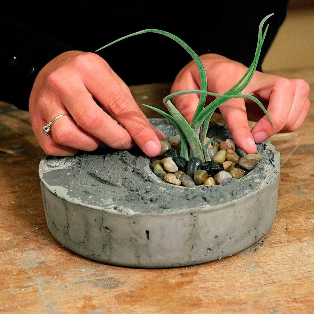 plant air plant in air plant planter