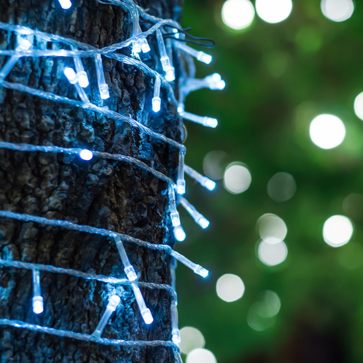 Outdoor Tree Lighting Ideas: Wrap Trunks